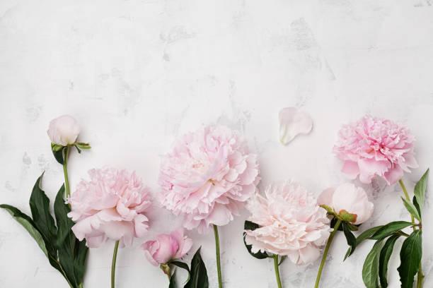 Wonderful pink peony flowers on white stone table with copy space for picture id806870506?b=1&k=6&m=806870506&s=612x612&w=0&h=cxrneumxlp0jehldcfacplfukbt6tig3j3bjviosc6y=