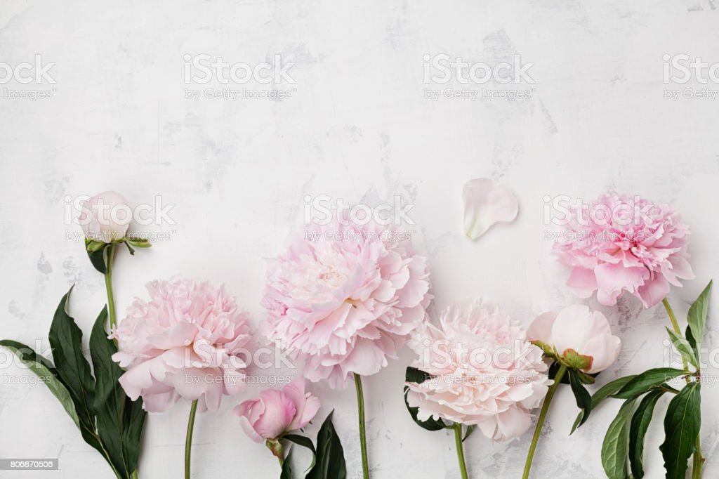 Wunderschöne rosa Pfingstrose Blumen auf weißem Steintisch mit textfreiraum für Ihren Text. Flache Laien Stil. – Foto