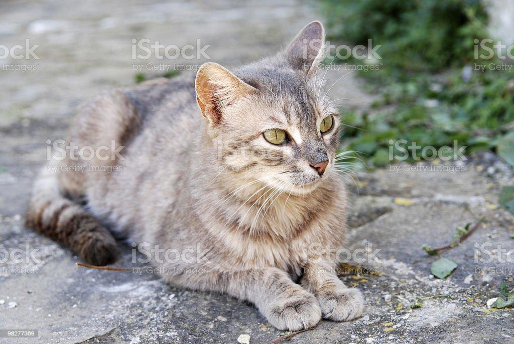wonderful pride cat royalty-free stock photo