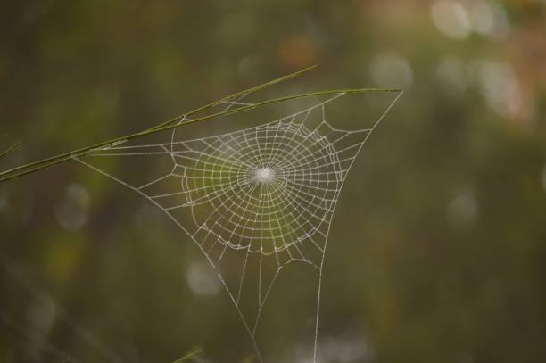 Wunderbare Spinnennetz In Medulas antike römische Goldmine an einem Tag mit viel Nebel In den Medulas. Natur, Reisen, Landschaften, Geschichte. – Foto