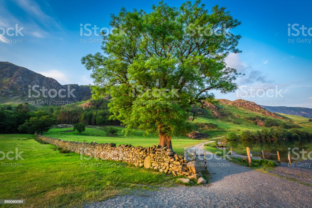 Wonderful sunset with big tree on meadow, District Lake stock photo