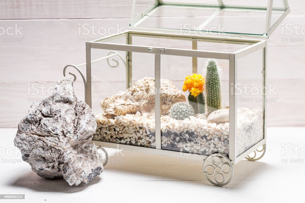 Wonderful terrarium with cactus and piece of desert royalty-free stock photo