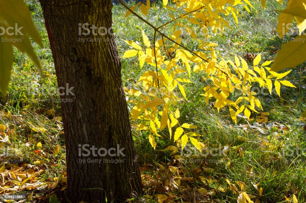 A wonderful time to fall stock photo