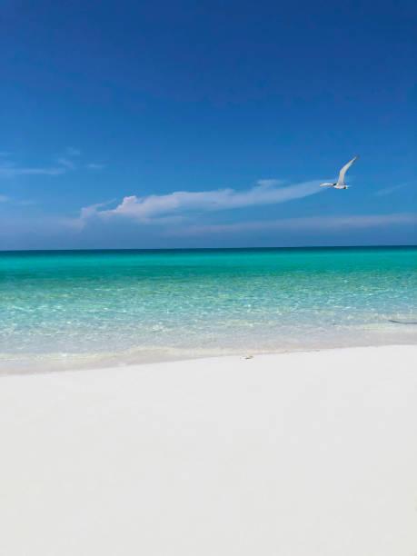wonderful tropical exotic caribbean cuban beach, Santa Maria, Cuba stock photo