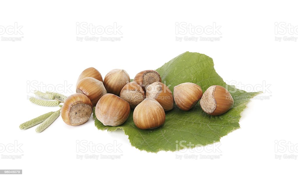 Wonderful view of autumnal hazelnuts with buds. royalty-free stock photo