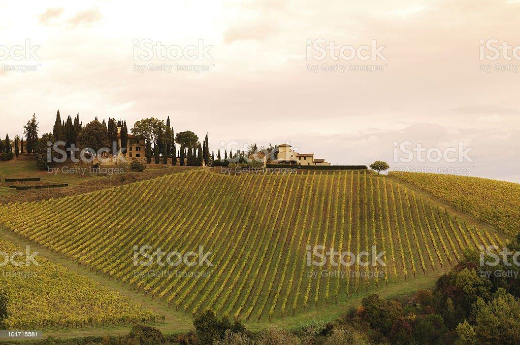 Wonderful Vineyards of Chianti Sunset royalty-free stock photo