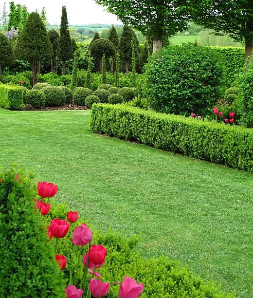 superbe vue sur le jardin - buis photos et images de collection