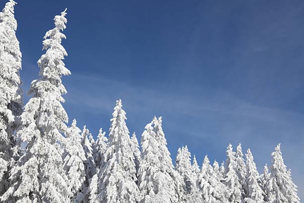 Schöne Winterlandschaft mit Tannen – Foto