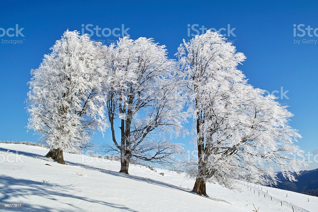 wonderful winterday with snowy trees in front of blue sky royalty-free stock photo