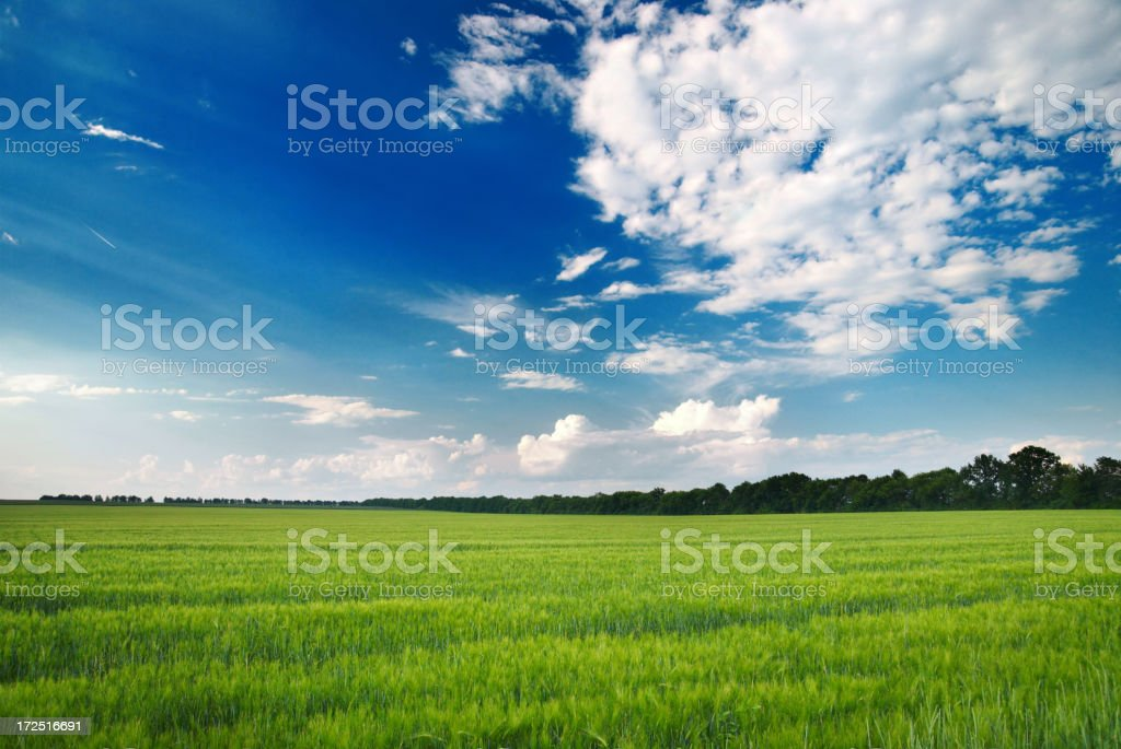 wonderland green meadowsee also: Agricultural Field Stock Photo