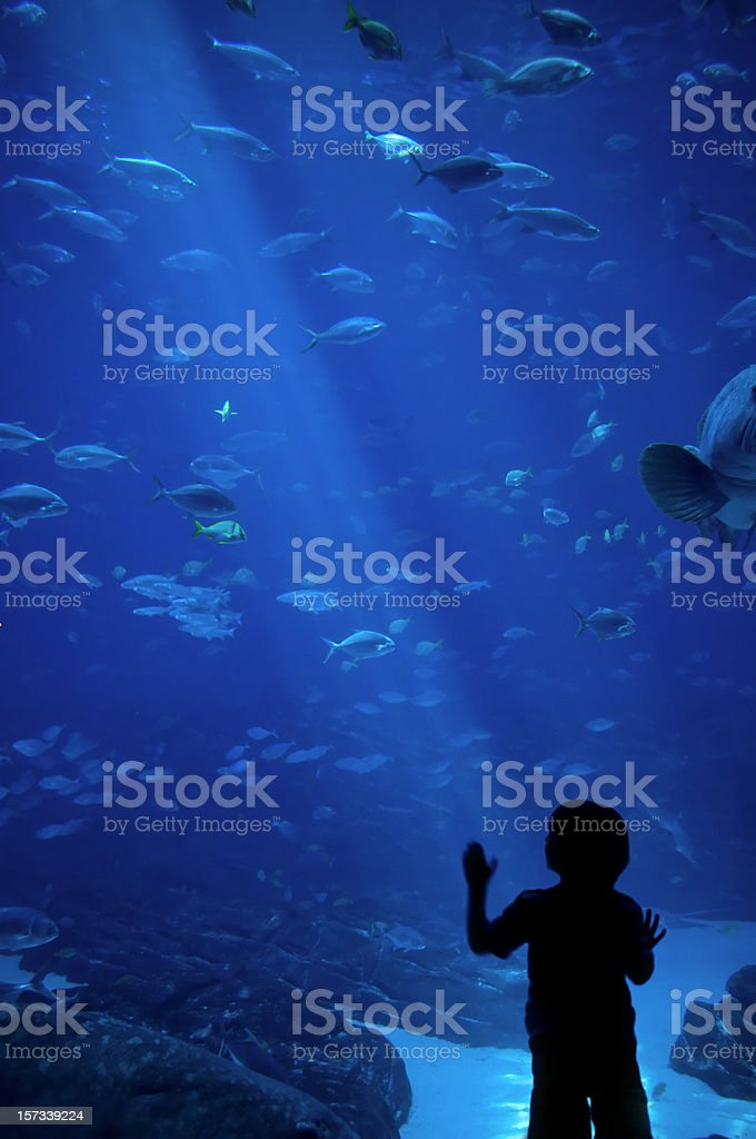Wonderous Sea Life stock photo