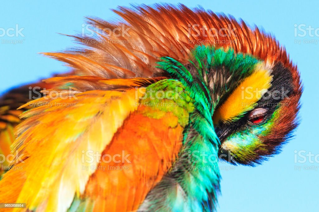wonders of nature - a beautiful bird of colored feathers royalty-free stock photo