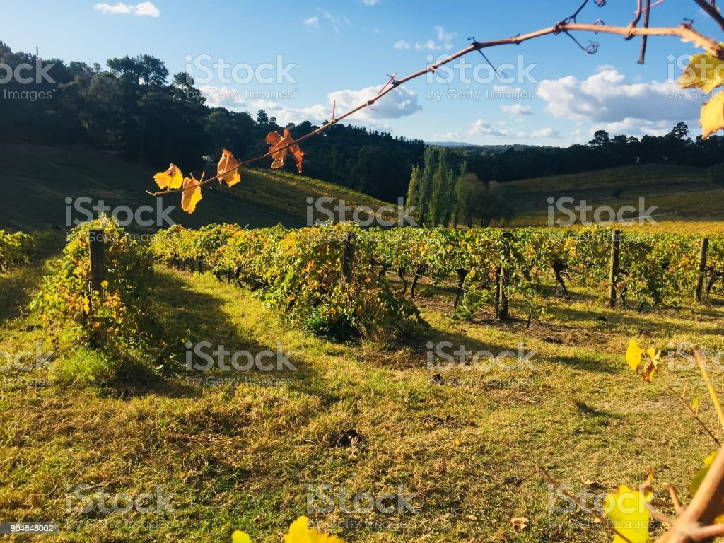 Wonga Park Wineries royalty-free stock photo