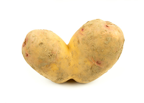 Conjoined Siamese potato on a white background with copy space. Potential use as wonky / ugly vegetable or food waste concept.
