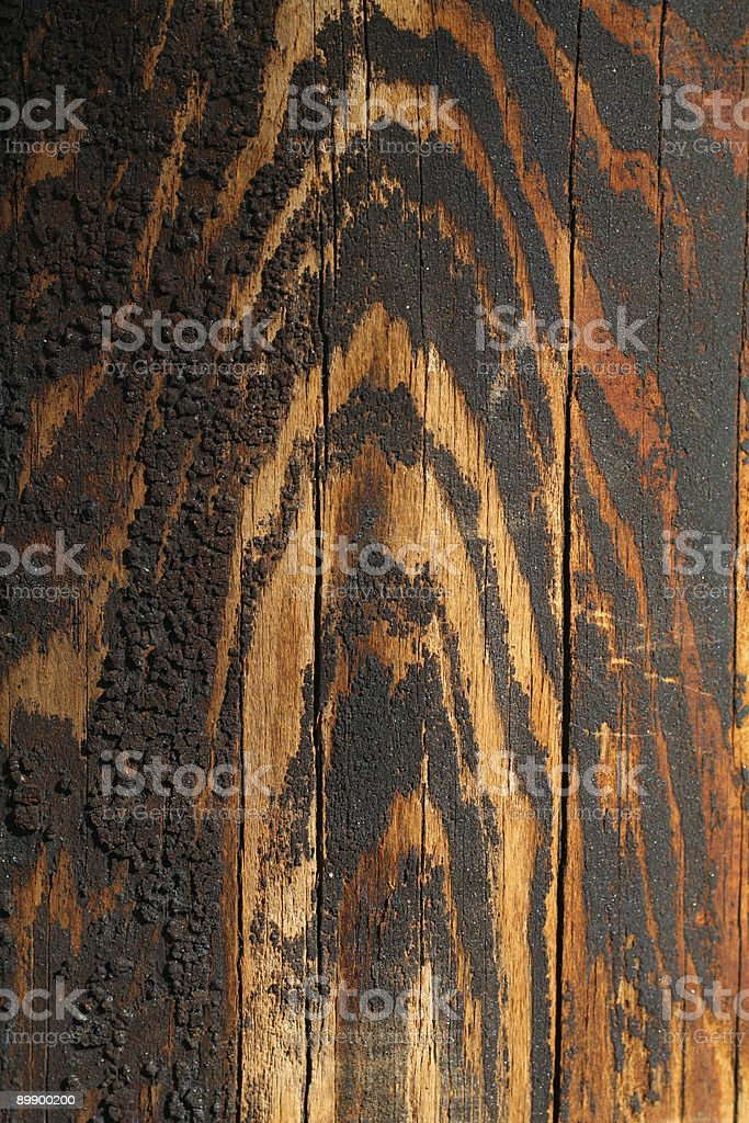 Wood acquired tiger coloring as it aged royalty-free stock photo