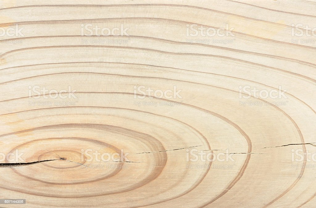 Wood Age Ring Background Texture stock photo