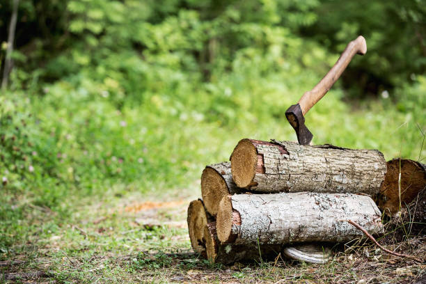 wood and axe in tre forest wood and axe in tre forest lumberjack stock pictures, royalty-free photos & images