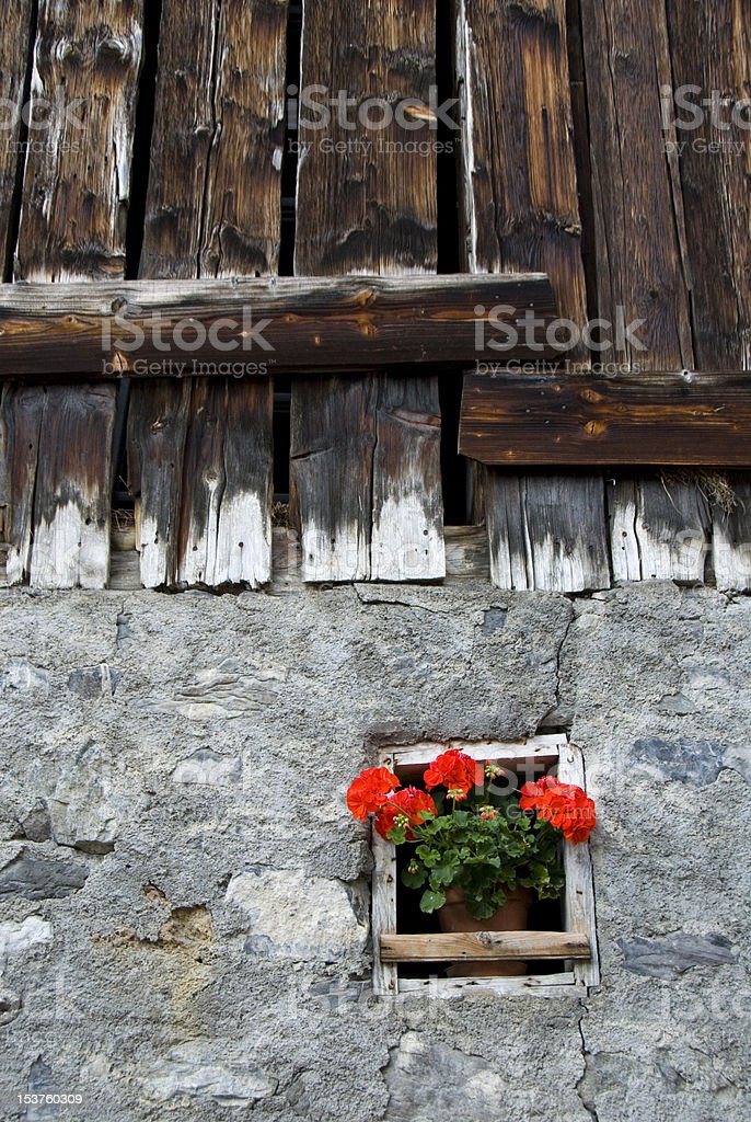 Wood and stone wall with red Geranium flowers stock photo