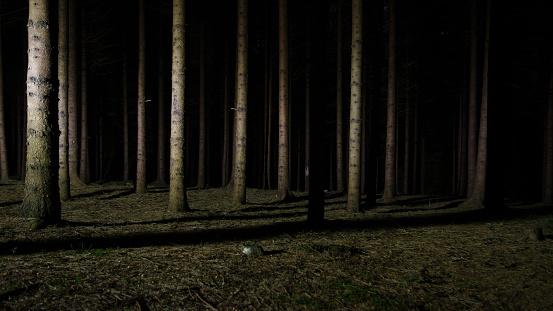 Wood at moonlight