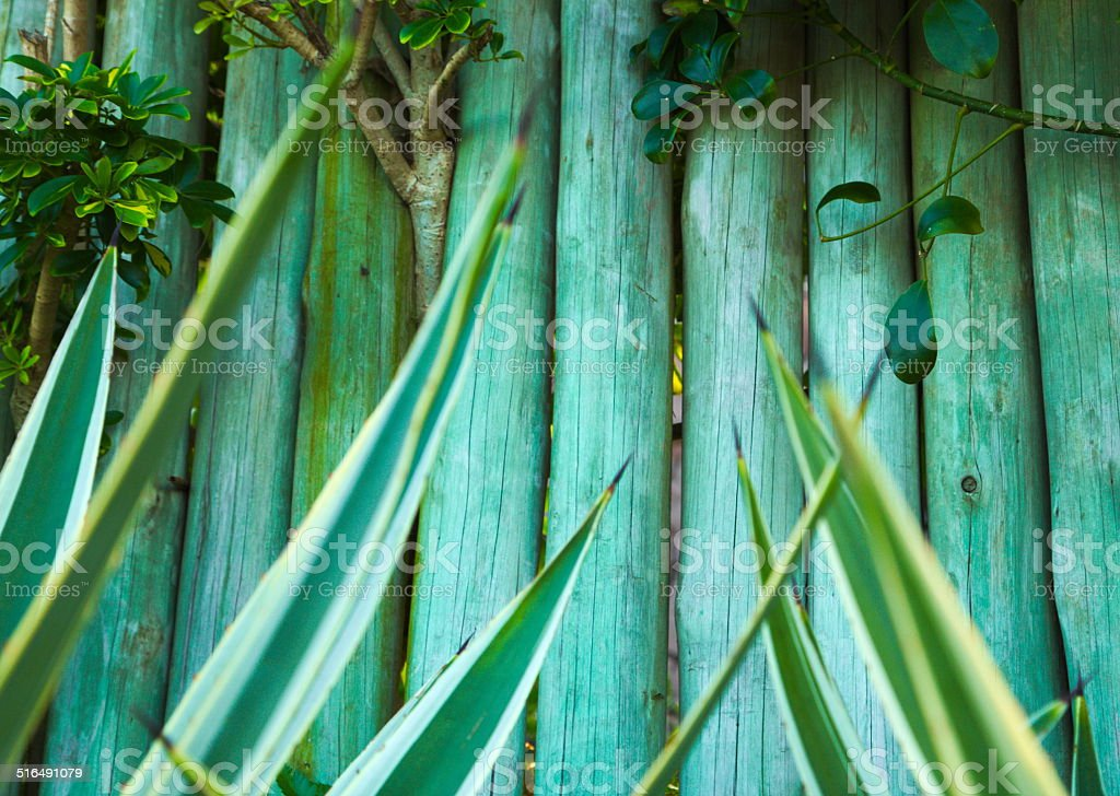 Wood backgorund with plants on green color stock photo