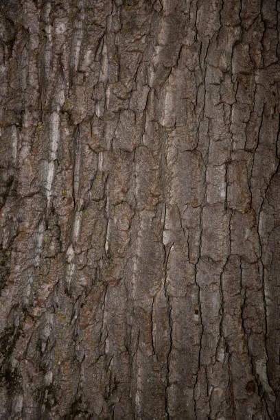 Fond de bois - Photo