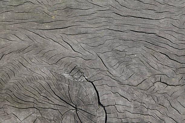 holz hintergrund - jeff wood stock-fotos und bilder