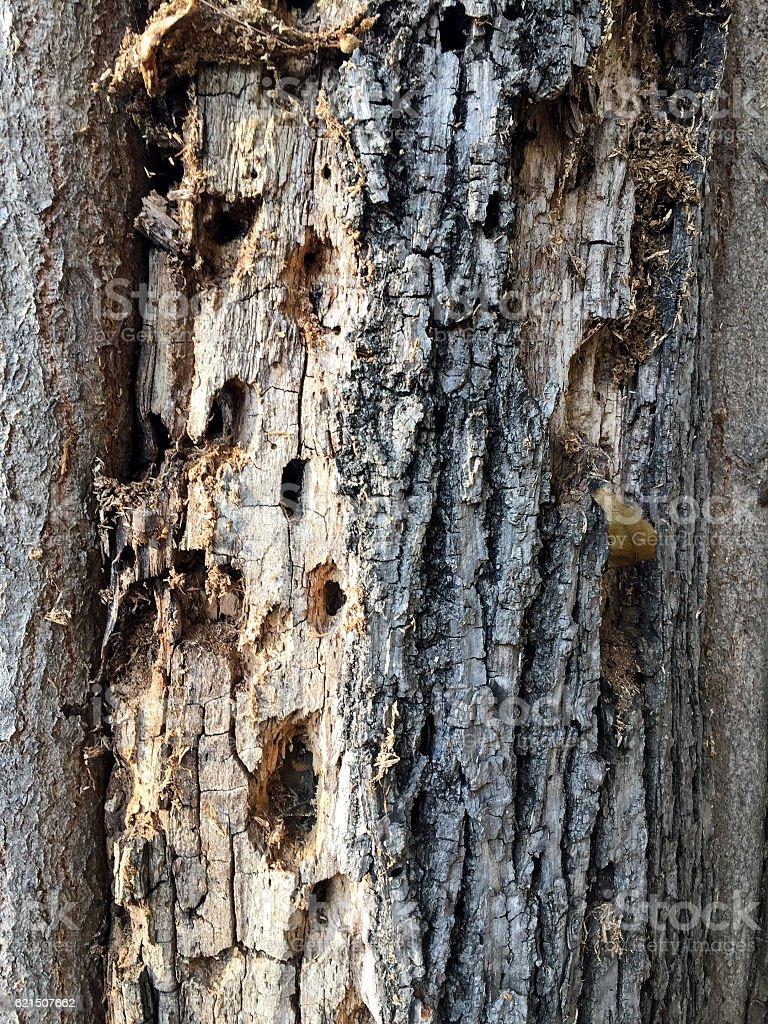 Sfondo in legno  foto stock royalty-free