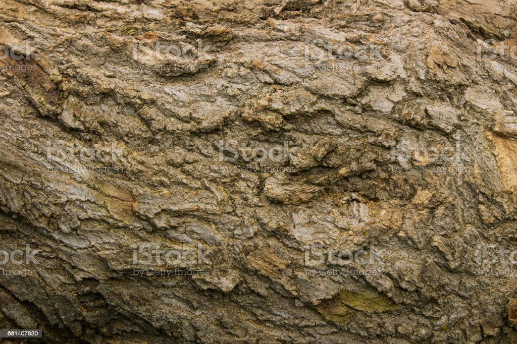 Wood background texture. royalty-free stock photo