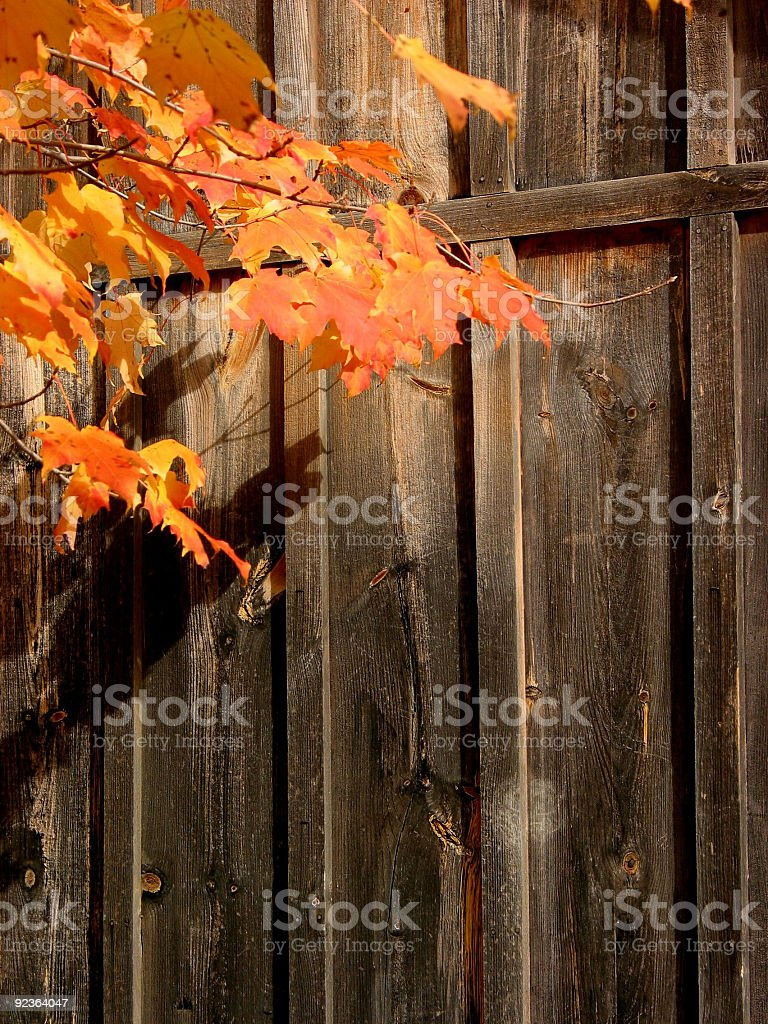 Wood background with autumn leaves royalty-free stock photo