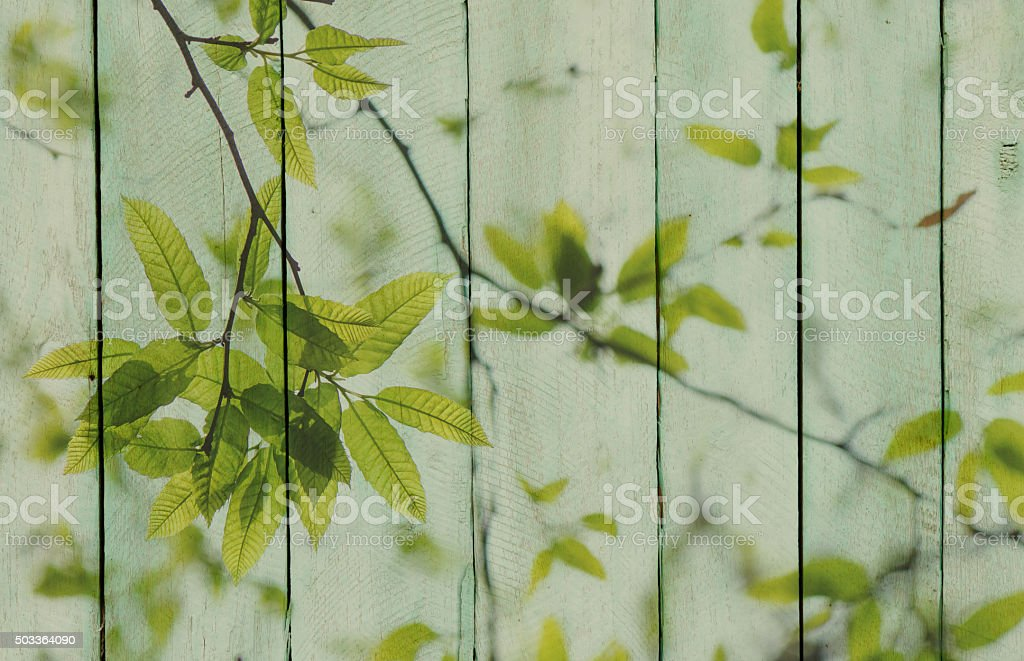 Wood background with green leaves overlay stock photo
