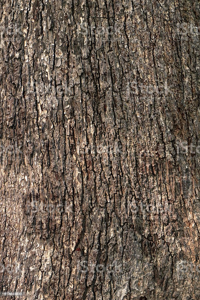 Wood bark texture background stock photo