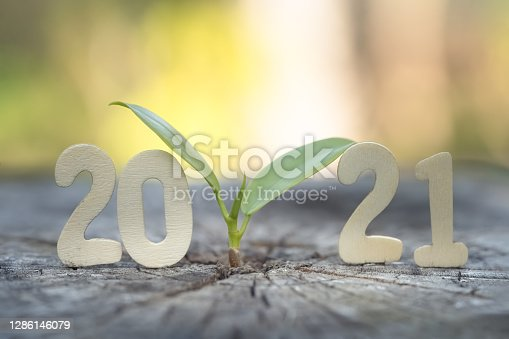istock Wood block 2021 and  small plant tree. 1286146079