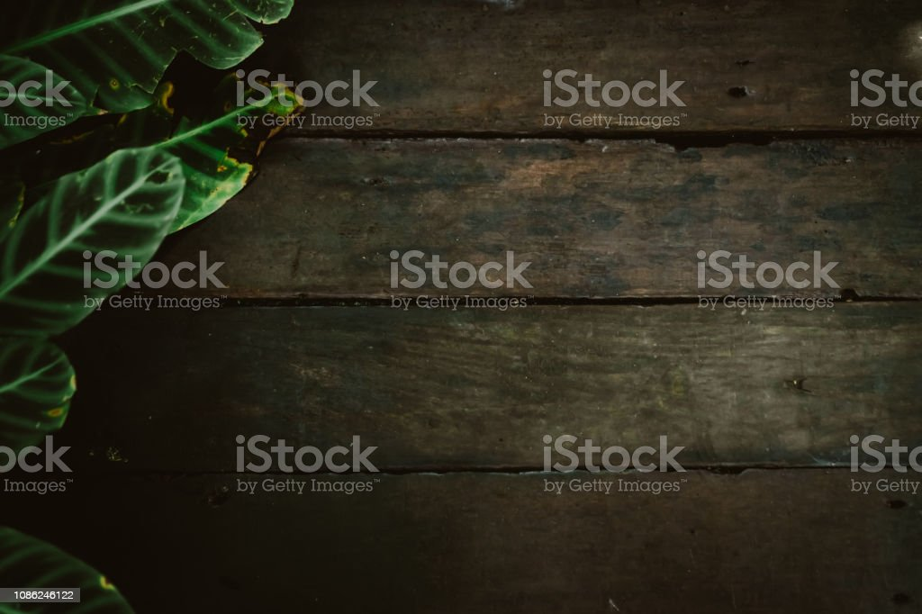 Wood board dark tone color with green leaf frame using as copy space...