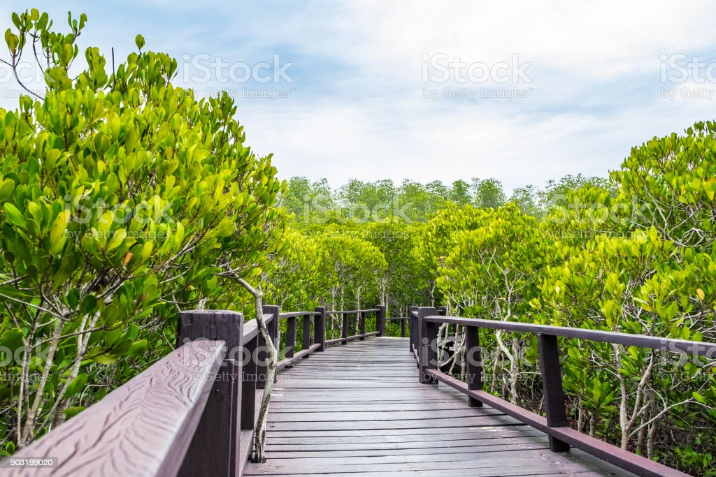 Wood boardwalk between Mangrove forest and blue sky ,Study natural trails,aerial view stock photo