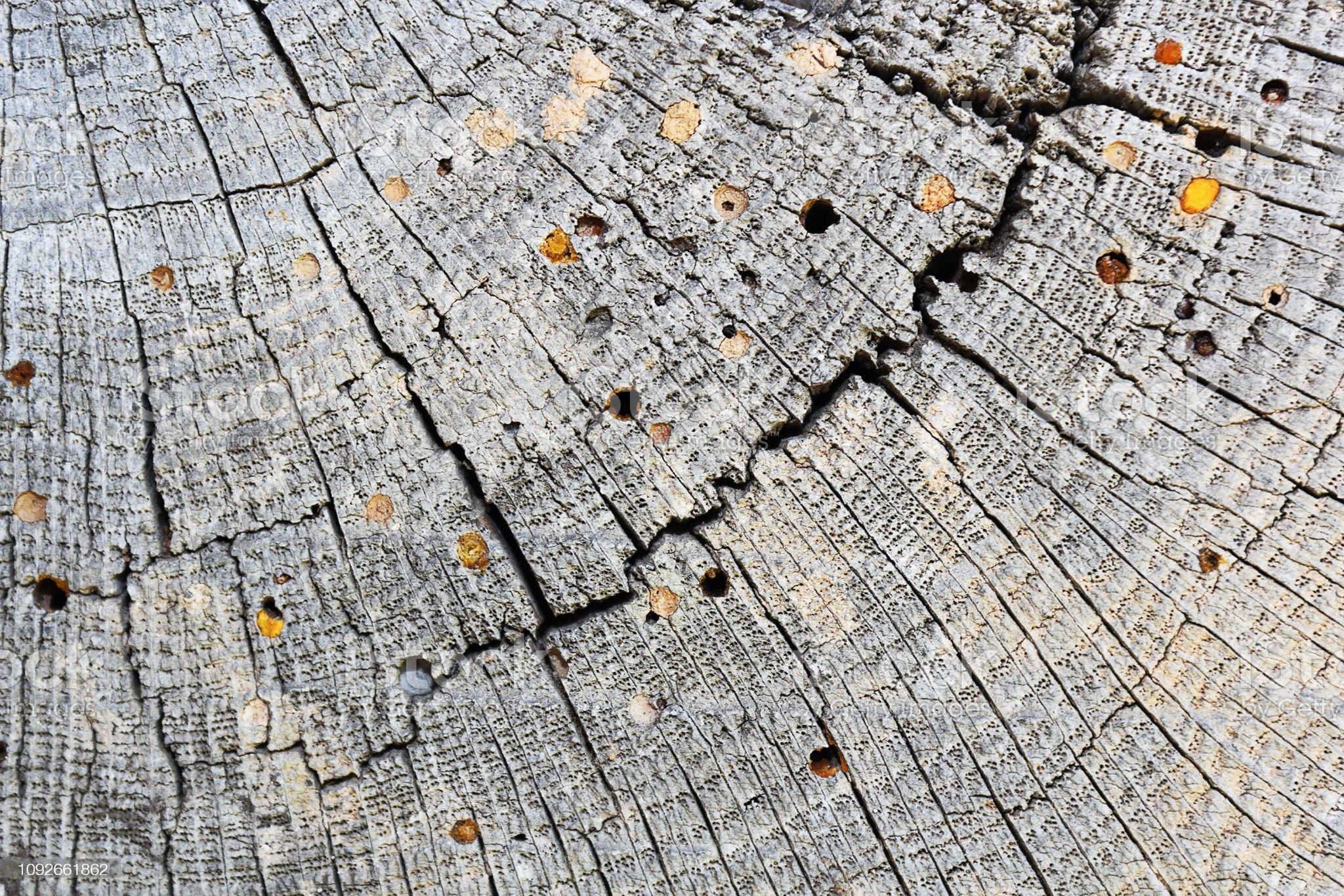 perce-bois bois attaque sur les vieilles poutres en bois, texture photo libre de droits