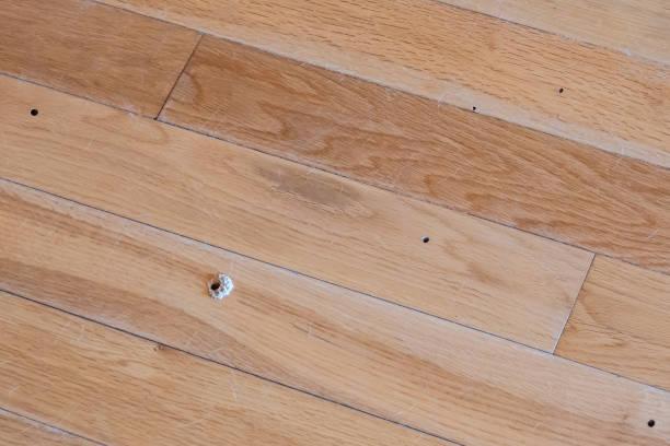 Wood Boring Beetle Damage stock photo