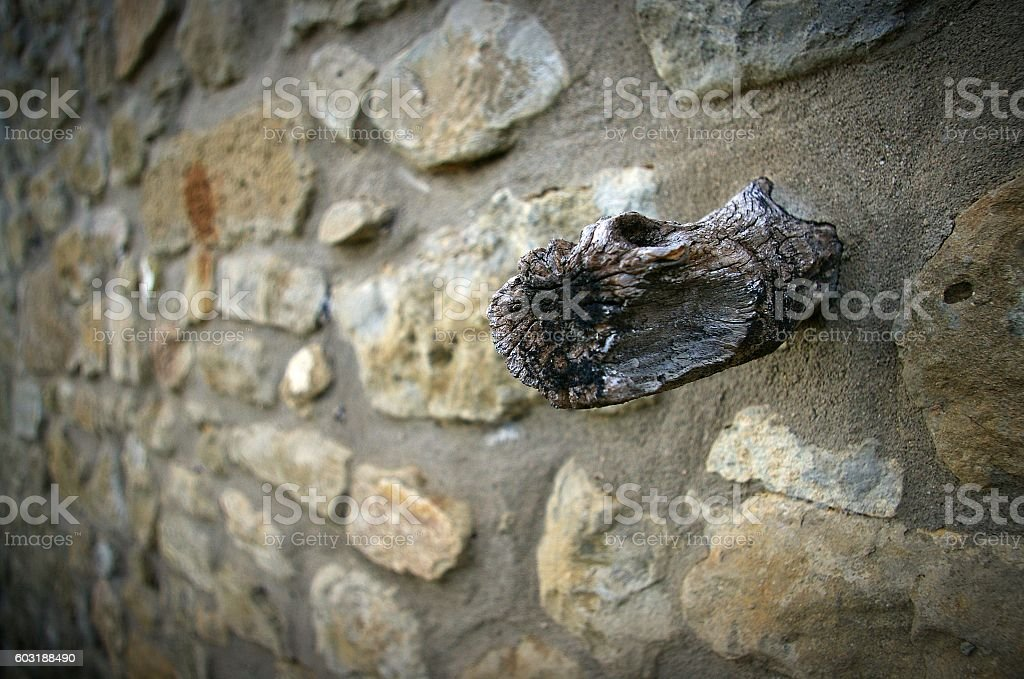 Wood branch in stone wall stock photo