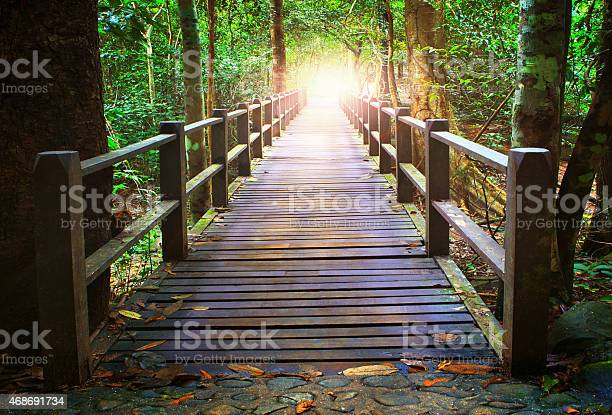 Photo of wood bridge in forest