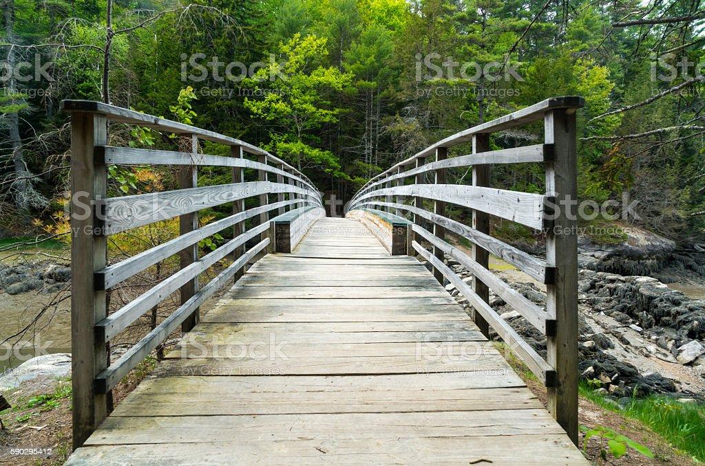 Wood Bridge Leading into Green Forest Стоковые фото Стоковая фотография
