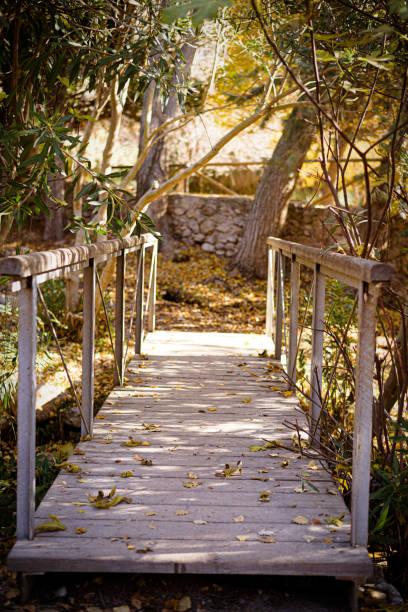 Puente de madera en la perspectiva del punto de fuga del bosque - foto de stock
