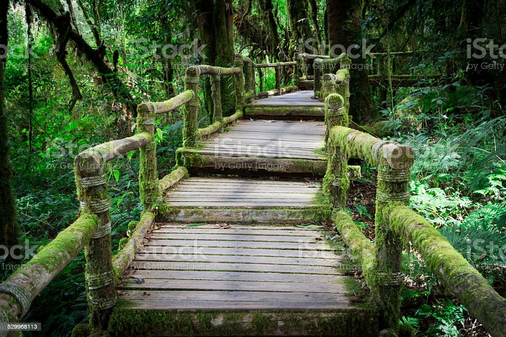 Wood bridge with moss in natural park Thailand stock photo