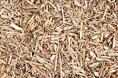 Wood chip for biomass