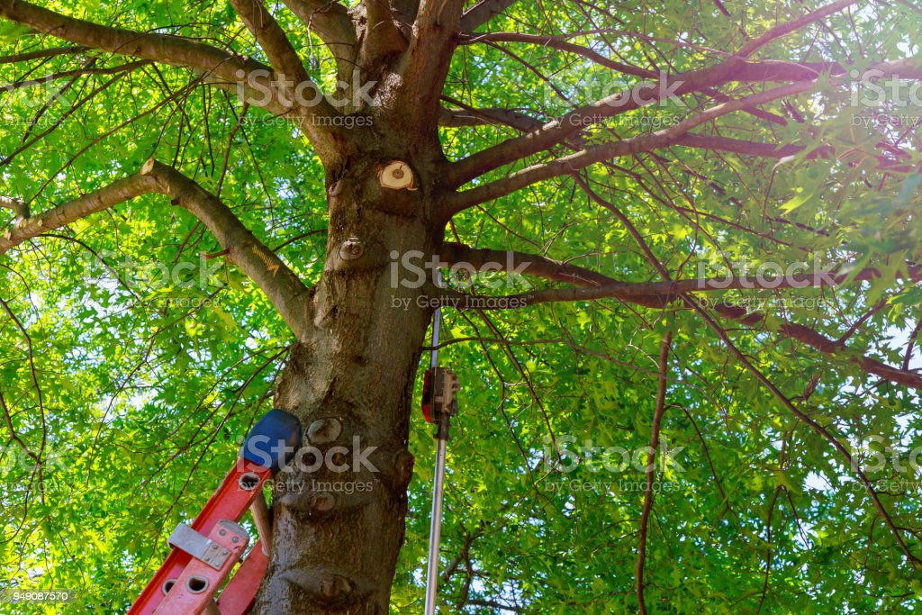 Wood Chipper With wood chips stock photo