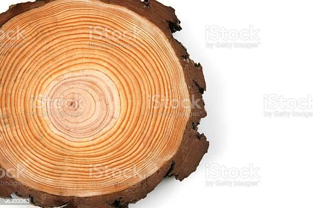 Photo of wood crossection