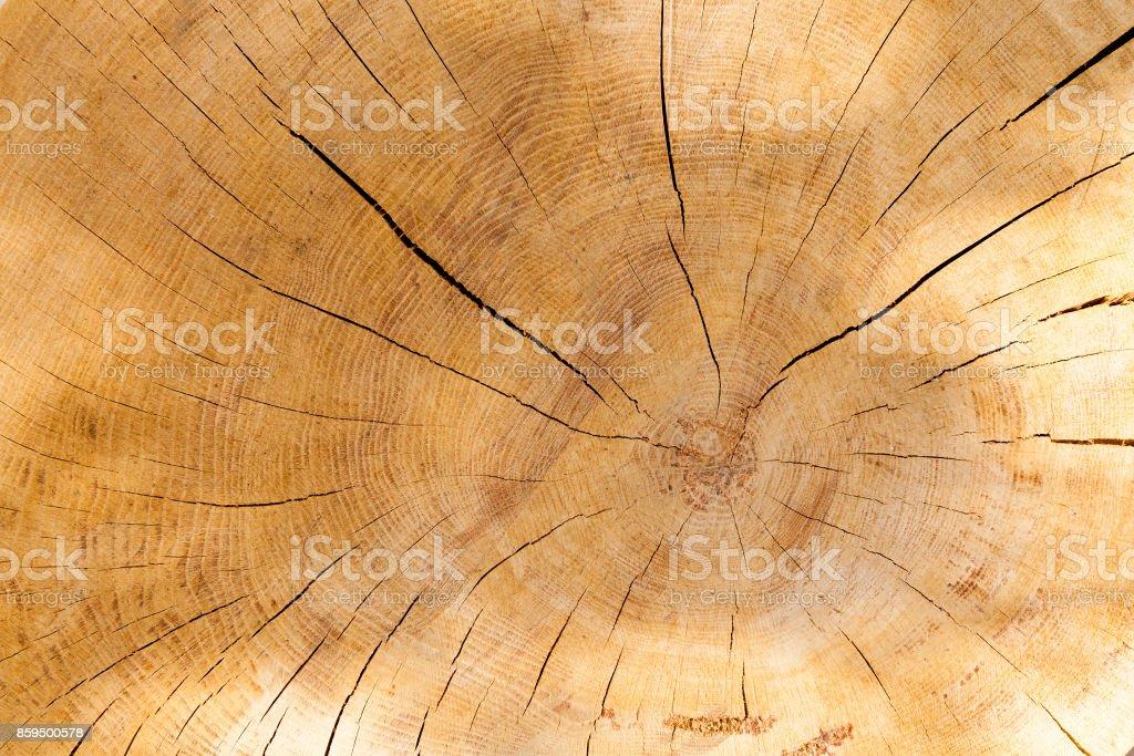 Wood cut background stock photo