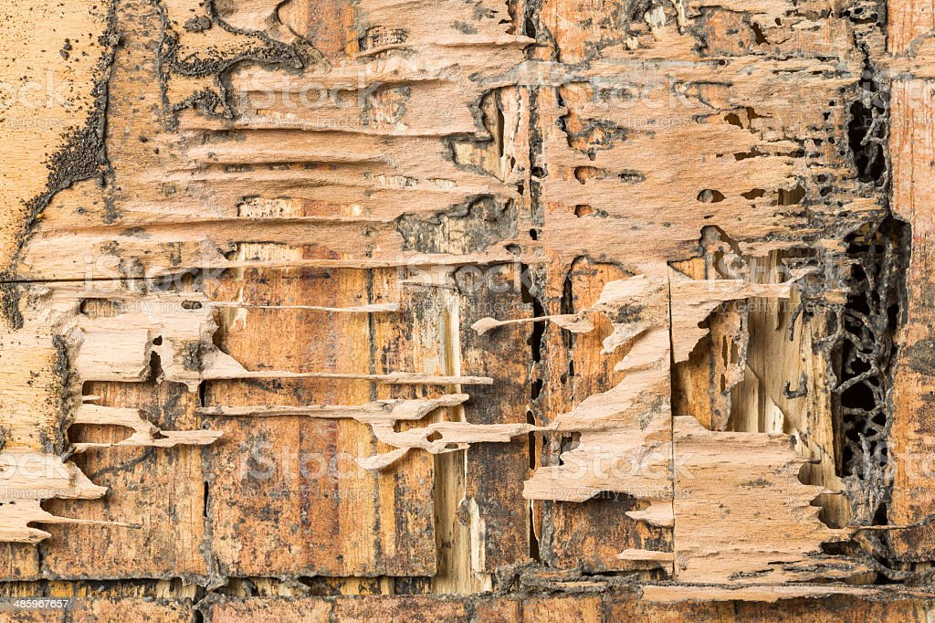 Wood eaten by termites stock photo