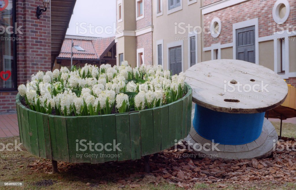 Wood flower pot with hyacinths in bloom in shopping mall. Shot on film royalty-free stock photo