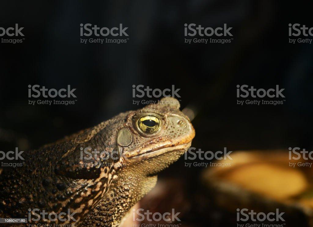 Holz-Frosch Metamorph – Foto