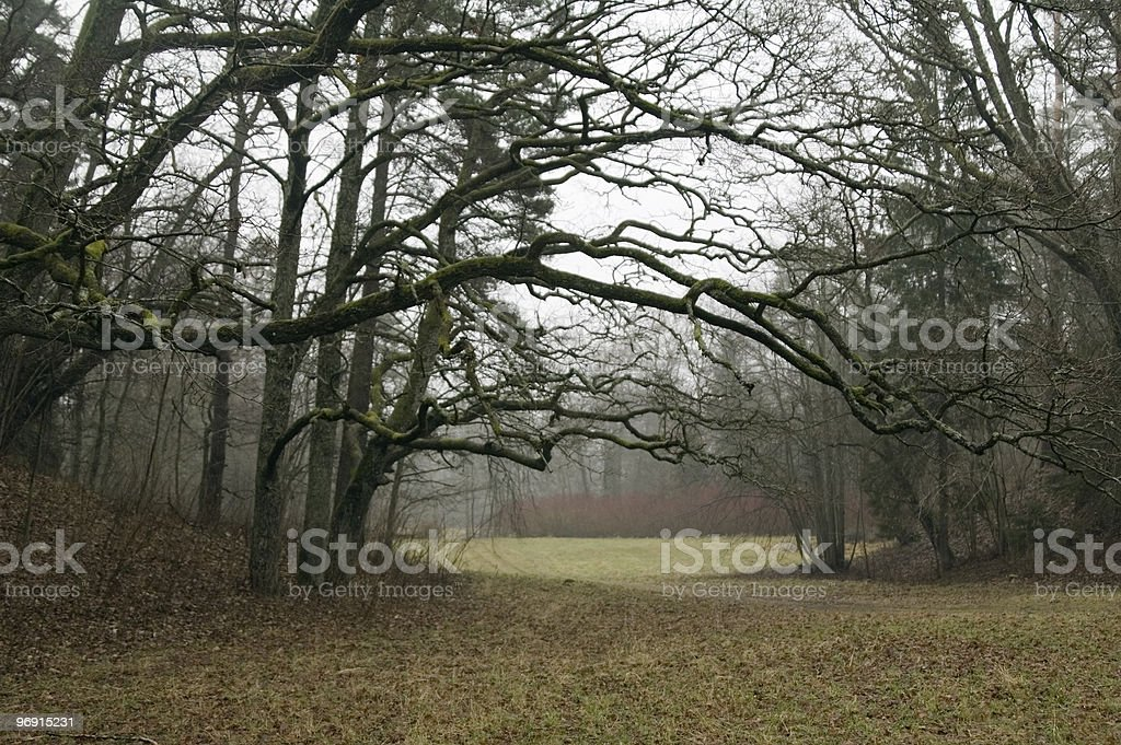 Wood glade royalty-free stock photo