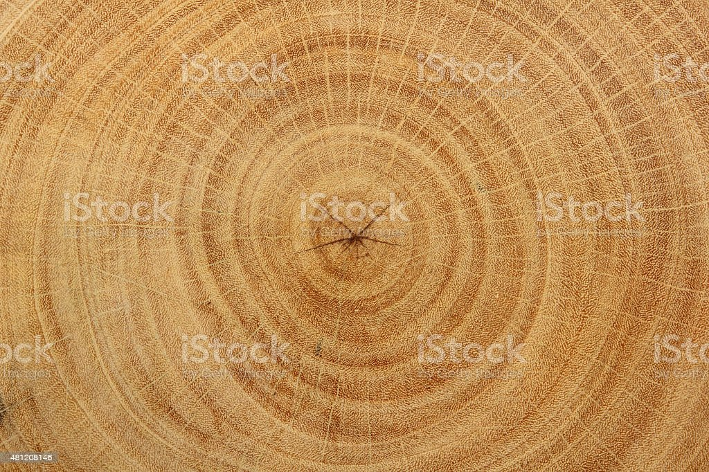Wood Grain of tamarind tree stock photo